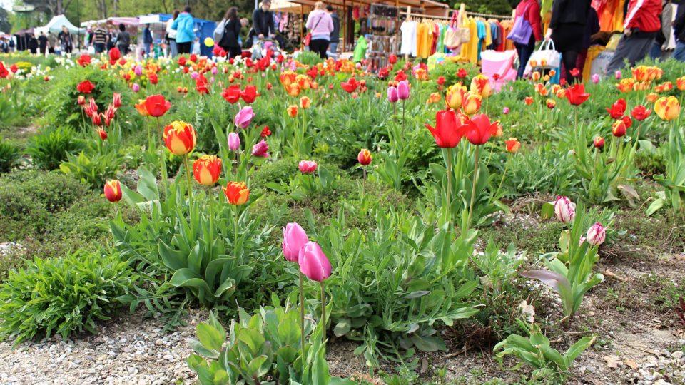 Tulipány každoročně zdobí jarní Floru Olomouc