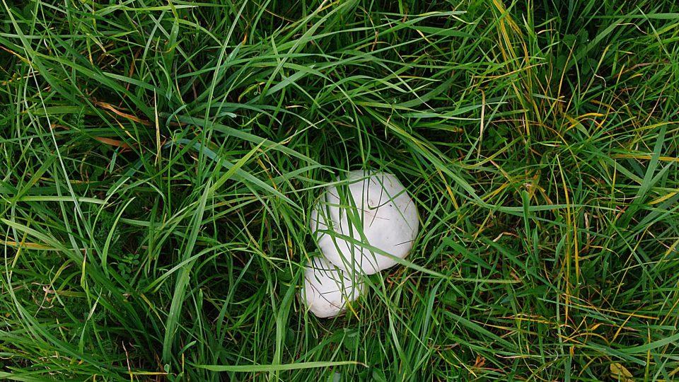Nerostou zde jen vyšší rostliny, ale i houby