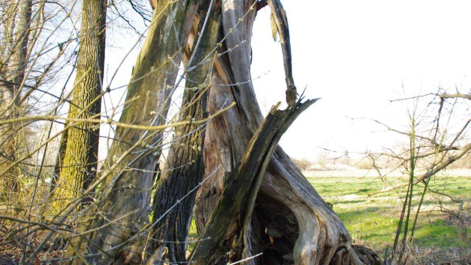 Odumřelé stromy zde zůstávají na svém místě