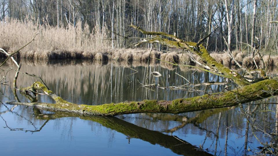 Ostřice a rákos zde stále vytvářejí rašelinnou vrstvu