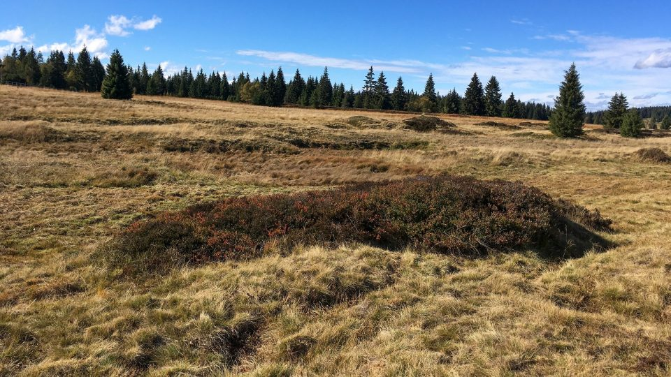Nápadné pahorky tzv. sejpy jsou pozůstatky po středověkém rýžování cínové rudy