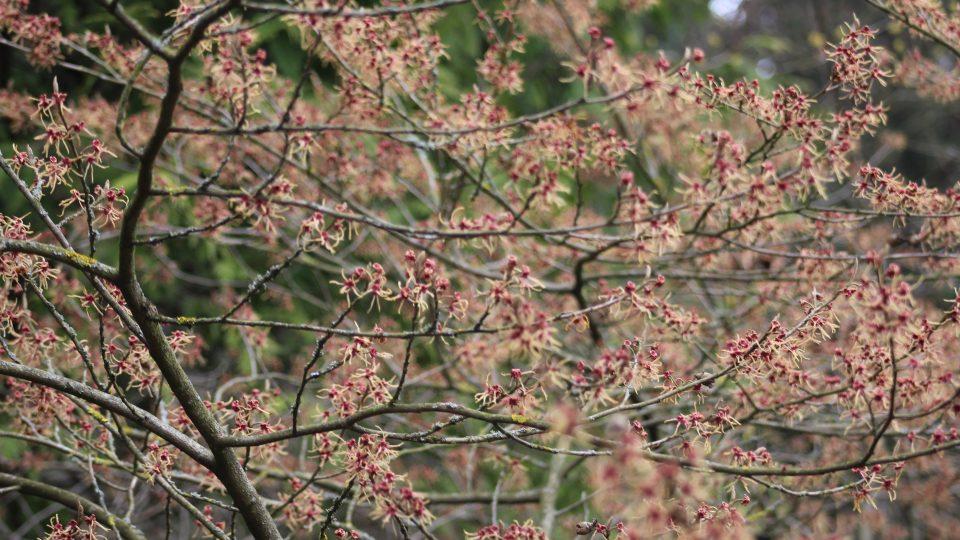 Jaro v arboretu Bílá Lhota