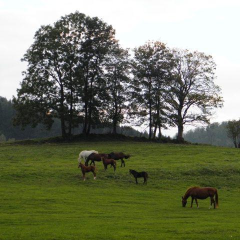 Hraničná - na loukách pod obcí se dodnes pasou koně