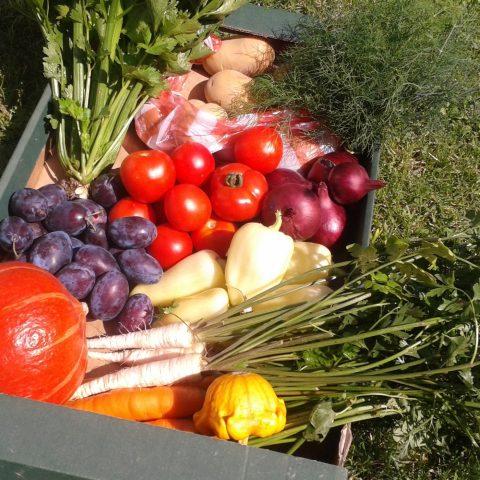 Zeleninová bedýnka z farmy
